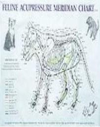 Feline Acupressure Meridian (Chart)