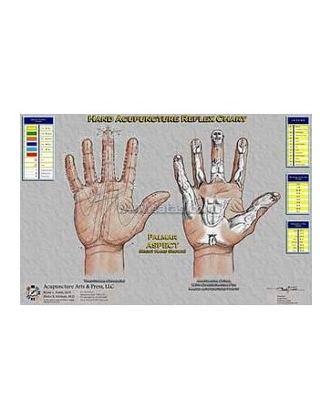 Hand Acupuncture Reflex Chart  (Double A3)