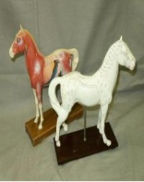 Acupuncture Model Horse