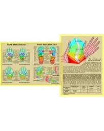 Hand Reflexology / Foot Reflexology  (Chart A4)