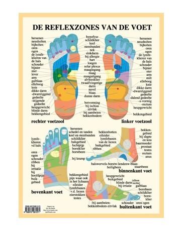 Reflexzones van de voet  (Poster A2)