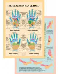 Reflexzones van de hand  (Poster 16x24)