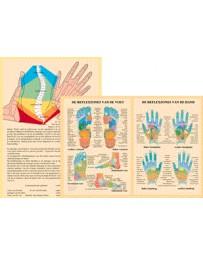 Reflexzones van de hand en van de voet (Poster A4)