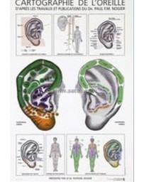 Cartographie de l'oreille (Planche)