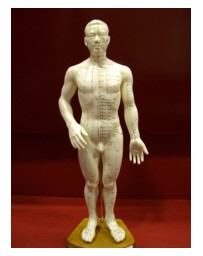 Modèle d'Acupuncture Masculin chinois/anglais