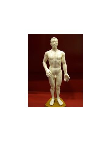 Mannelijk Acupunctuur Model Chinees/Engels