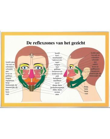 De reflexzones van het gezicht  (Poster 16x24)