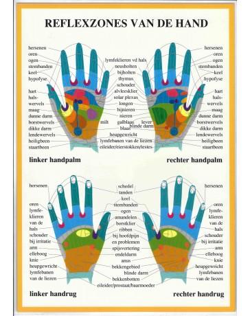 Reflexzones van de hand (Poster A4)